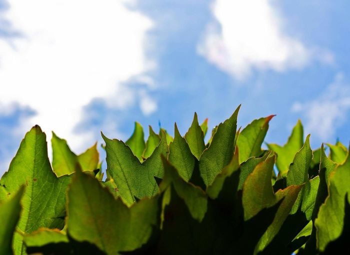 Leaf Nature Plant Sky No People Growth Close-up Beauty In Nature Outdoors Freshness Agriculture Day