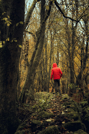Rear View Of Man Standing At Forest