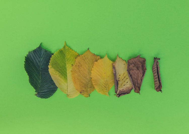Close-up of autumn leaves against green background