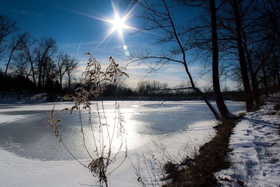 Sun Sky Sunlight Tree Water Nature Sunbeam Plant Beauty In Nature Scenics - Nature Tranquility Day Lens Flare Silhouette No People Tranquil Scene Reflection Sunny Idyllic Bright