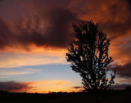 Colorado Sunset Sunset Tree Silhouette Sky Cloud - Sky Nature Beauty In Nature Scenics Tranquility Tranquil Scene Growth No People Outdoors Landscape Day Colorado Colorful Clouds Vacations Travel Life Memories
