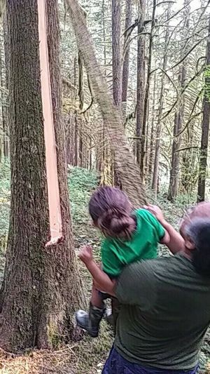 Grandson Jaxx first pull of cedar bark