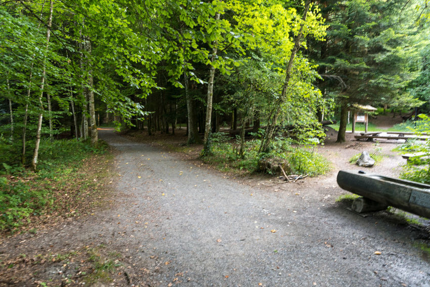 Zürichseerundweg Hiking Trail Waldweg Wanderweg Beauty In Nature Bench Day Direction Footpath Forest Forest Track Fußweg Green Color Growth Land Nature No People Non-urban Scene Outdoors Plant Plant Part Switzerland The Way Forward Track Trail Tranquility Transportation Tree WoodLand