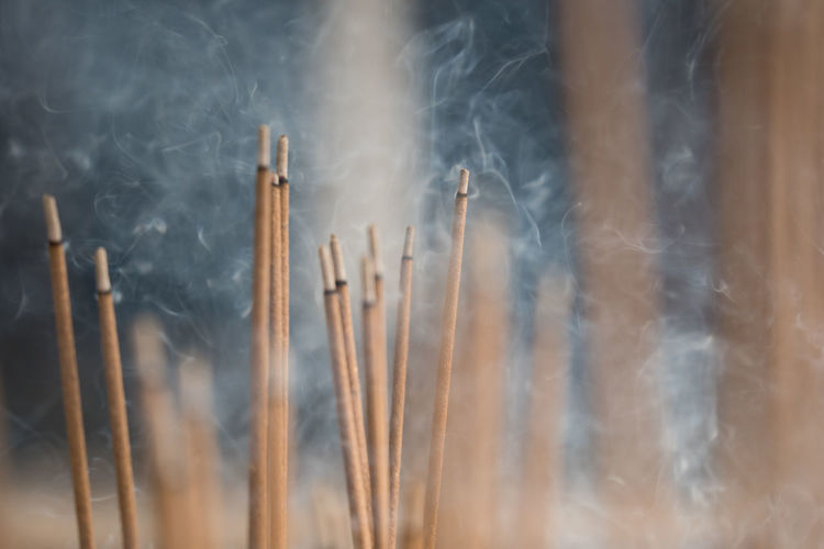 Close-up of burning incenses