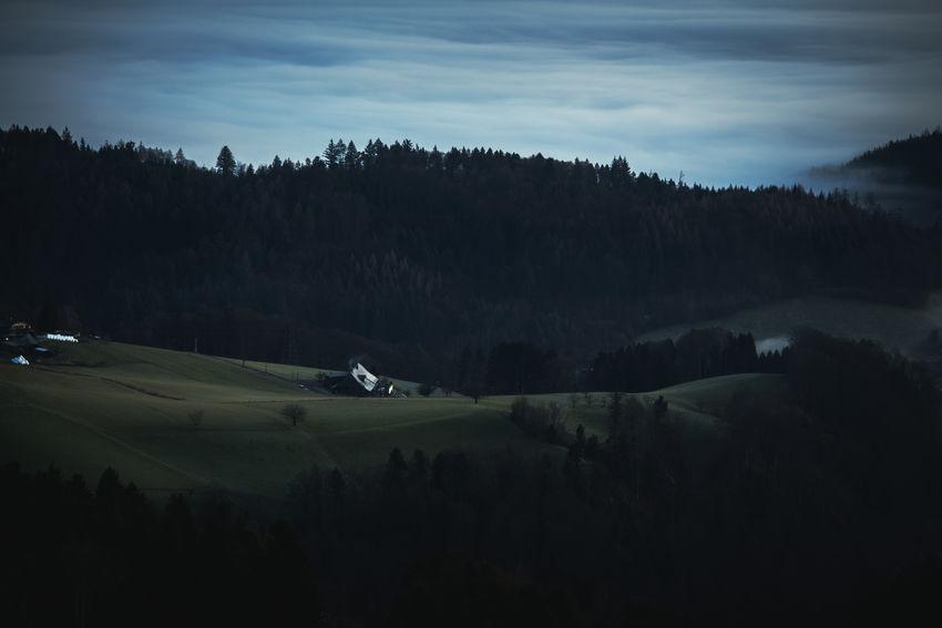 Hills Morning Light Soft Light Tree Trees Bantiger Fog House Idyllic Landscape Scenics Sea Of Fog Sunrise View Into Land