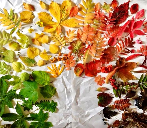 I pick up all color today so is mean summer is finish snow coming soon 😞 Beauty In Nature Plant Leaf Plant Part Growth Nature No People Tree Leaves