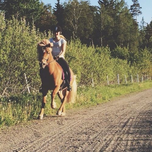 The best thing ever! Horses He Is The Best Love You Tandri