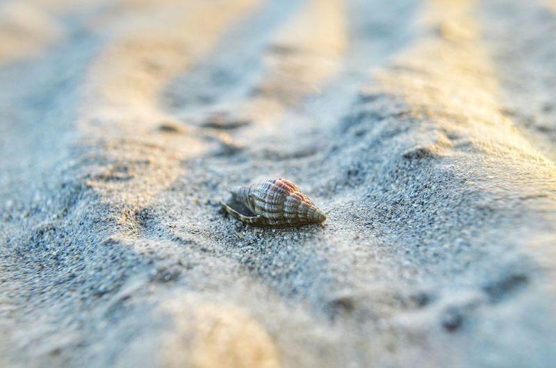Sea Life Beach