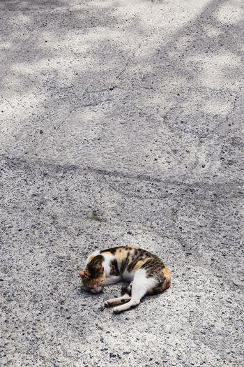 Cat Heat Heat -