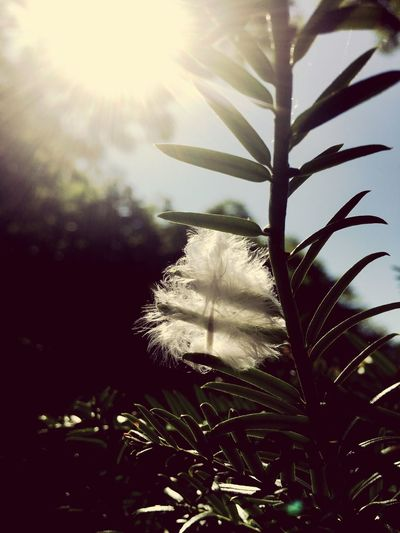 Wishes #wishes #feather Nature Leaf Tree Sunlight
