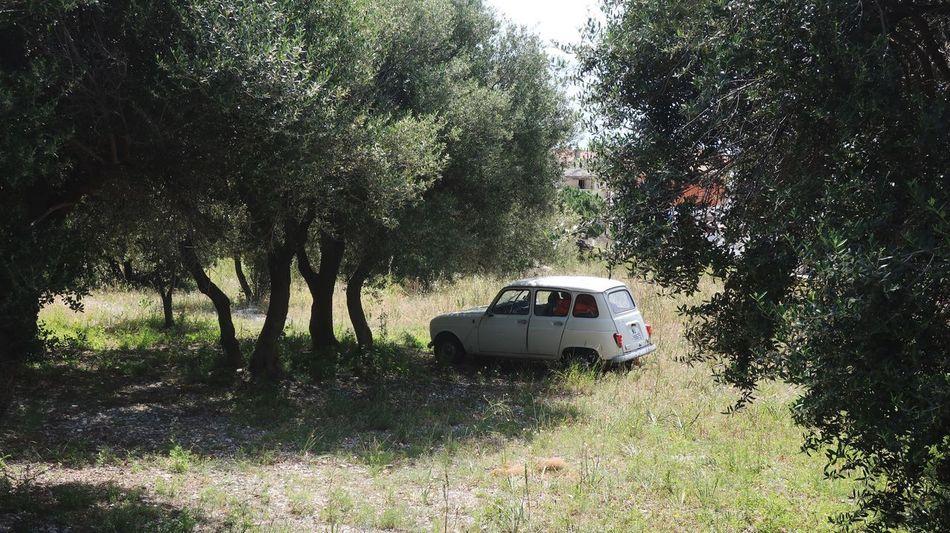 Shady Sardegna Sardinia Sardegna Italy  Sardinia Renault 4 Mode Of Transportation Plant Tree Transportation Land Vehicle Nature Motor Vehicle Car