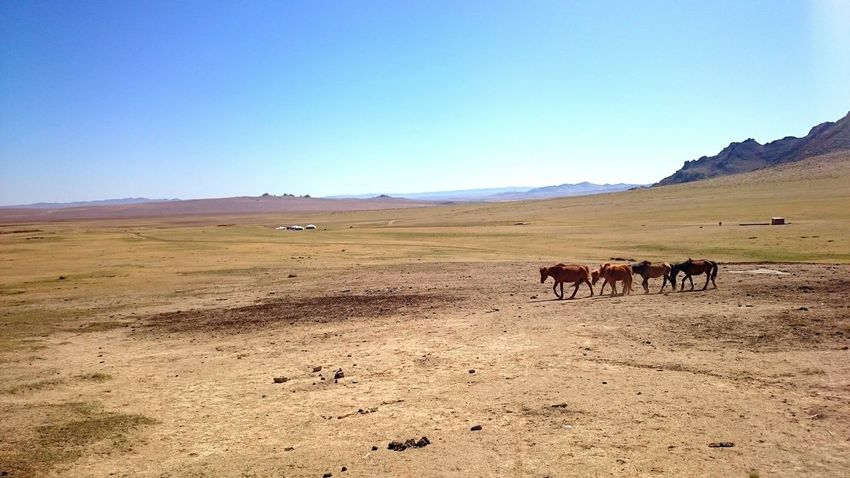 The Great Outdoors - 2017 EyeEm Awards Nature Nomadic Life Nomads Animals In The Wild Horses Landscape No People Countryside Mongolia Beauty In Nature Freedom Bluesky Sunny Day