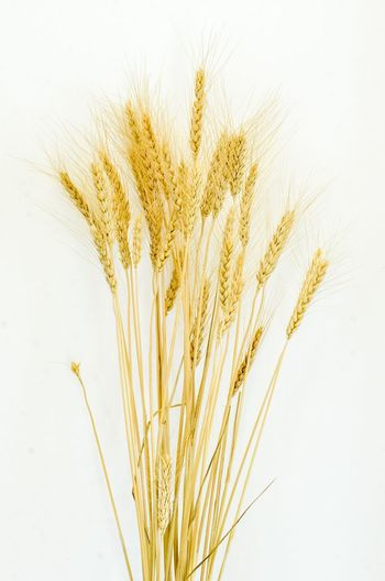 Close-up of stalks against white background