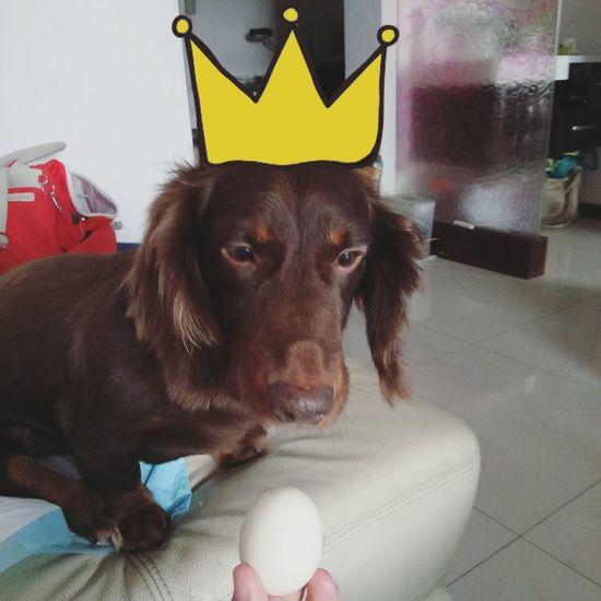 Happy birthday Coffee! Happy Birthday! Animal Themes Pets Dog Dog Love Dogs Of EyeEm Sausagedog Dog Lover Dachshund Dog❤ Cute Pets Doglover Dachshundlove I Love My Dog Doggie