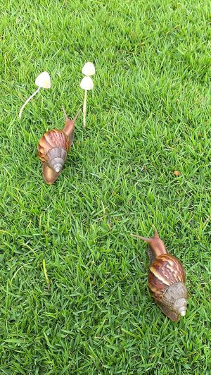 The big race Snails Snails Pace Nature_collection Nature Slug Green Grass Fungi Nature On Your Doorstep Eyeem Singapore