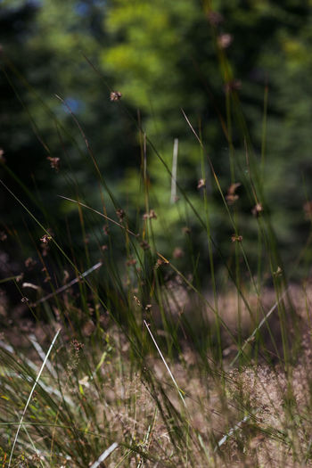 Close-up of spider web on a field