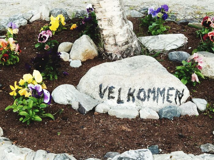 Text Flower Communication Day No People Close-up Velkommen Stone Welcome Welcome Sign Pansies Pansy Pansy Flower High Angle View Outdoors Garden Gardens Landscaping Inn Hotel Hostel Norway Norge Norwegian Nordic EyeEmNewHere
