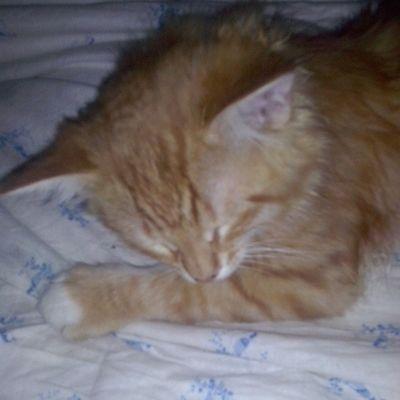 сон Люблю_кошек ЛюбителямКошек тимон catgoesmeow catsofinstagram catsagram catlover baby_sleep sleep