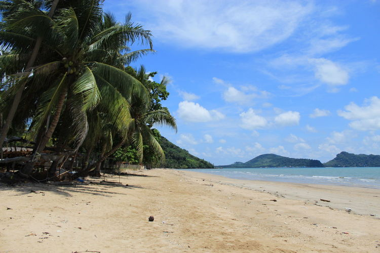 Chumphon Marine National Park Beach Beauty In Nature Cloud - Sky Coconut Palm Tree Day Growth Land Nature No People Non-urban Scene Outdoors Palm Tree Plant Sand Scenics - Nature Sea Sky Tranquil Scene Tranquility Tree Tropical Climate Water