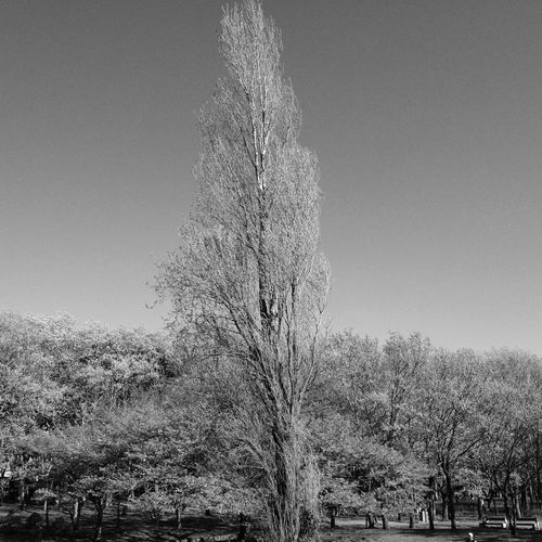 Blackandwhite Trees Branches Bw_collection
