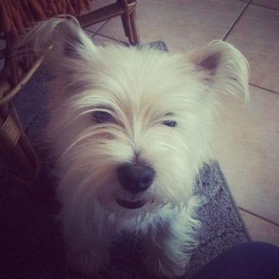 Hello owner! Welcome home!! Mylove Bubu Bubuday Home littledog littlelove doboz