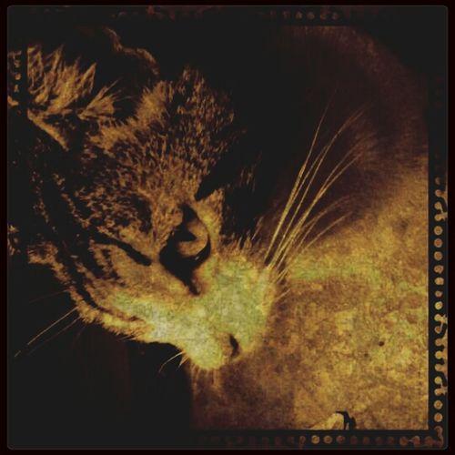 Baby Cat Beauty Wild