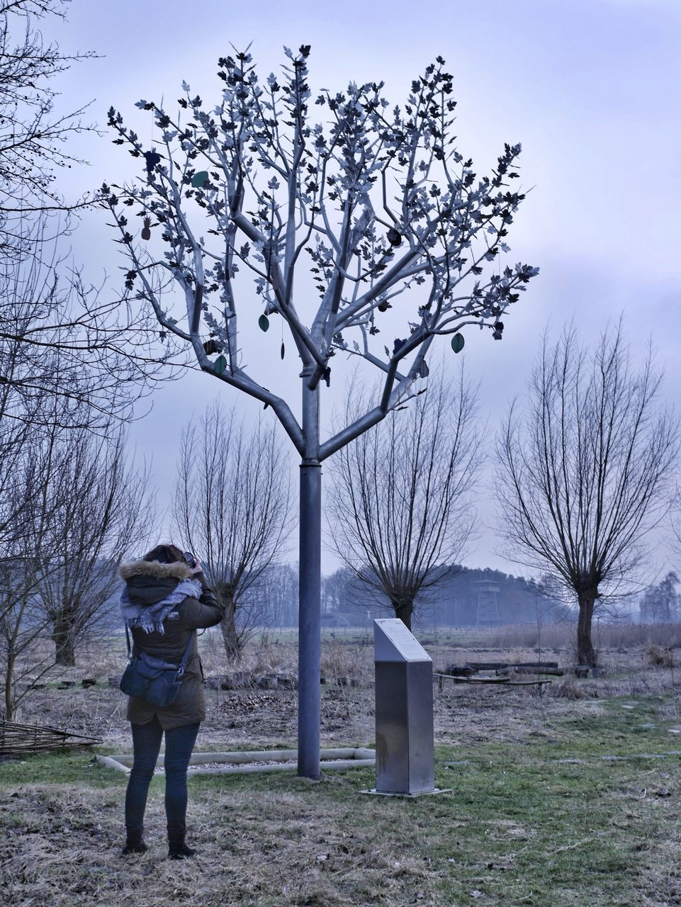 tree, bare tree, one person, real people, rear view, full length, field, branch, standing, casual clothing, leisure activity, tree trunk, day, outdoors, nature, lifestyles, sky, beauty in nature, people