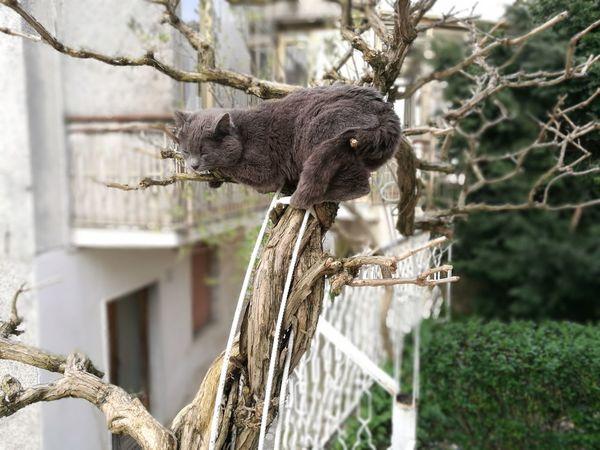 #crazycat #grey #green #Sleeping #sleepy #slightwork #sky #Nature  #photography #tired #koala #MYLOVE® EyeEm Selects Tree Perching Branch Owl Close-up Animal Themes Bark Tree Trunk