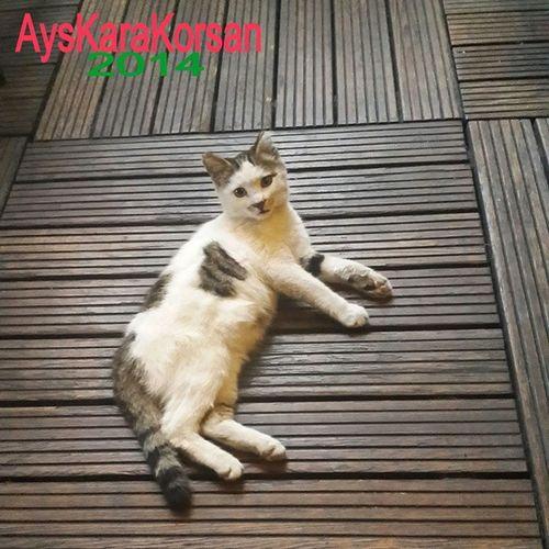 Kedidir OKedi Cat Koska