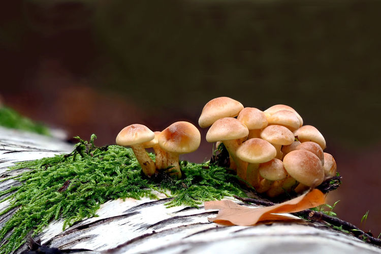 Nature Fungus