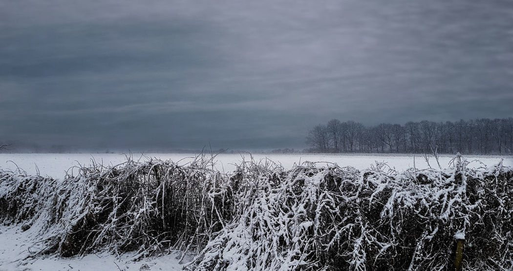 Snow ❄ Winter Winter Landscape Winterscapes Wintertime Beauty In Nature Cold Temperature Day Frozen Growth Landscape Nature No People Outdoors Scenics Sky Snow Snow Covered Snowcovered Snowlandscape Tranquil Scene Tranquility Weather Winter Winterlandscape