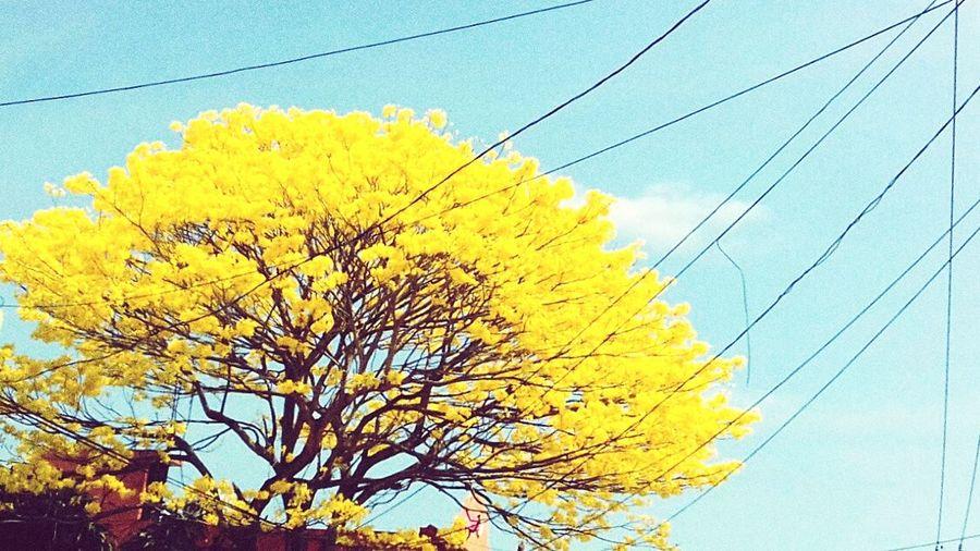 Al son de tabasco.. Sky Flower