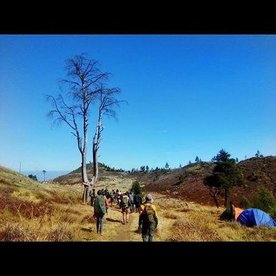 Instasize INDONESIA Prau Dieng Mountains Mylivemyadventure Instalike Panorama Landscape Salamlestari Nature Saveworld Indah Beutiful  Moment