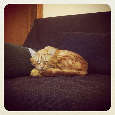 Sunday Sleeping! #sunday #domingo #sleep #dormir #siesta #camaron #cat #gato #catsofinstagram #instacat #igscout #_wg #instapic #instagramer #insta_crew #instamillion #tagstagramers #instago #instagroove #igersmadrid #picoftheday #insta_ñ #iphonesia #inst Insta_crew Camaron Igscout Cat Earlybirdlove Instagramer Sleep Catsofinstagram Siesta Instacat _wg Domingo Instagroove Gato Instapic Sunday Instamillion Iphonesia Tagstagramers Picoftheday Dormir Instamood Insta_ñ Latergram Igersmadrid Instago Earlybirdonly