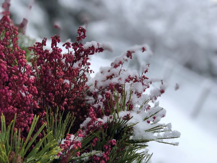 Beautiful snow everywhere EyeEm Gallery EyeEm Nature Lover EyeEmNewHere I❤️Gstaad I❤️snow Shades Of Winter Bolonie Art Bolonie Style Bolonie Nature Flower No People Beauty In Nature Winter Plant Growth Close-up Fragility Cold Temperature Day Outdoors Freshness Flower Head