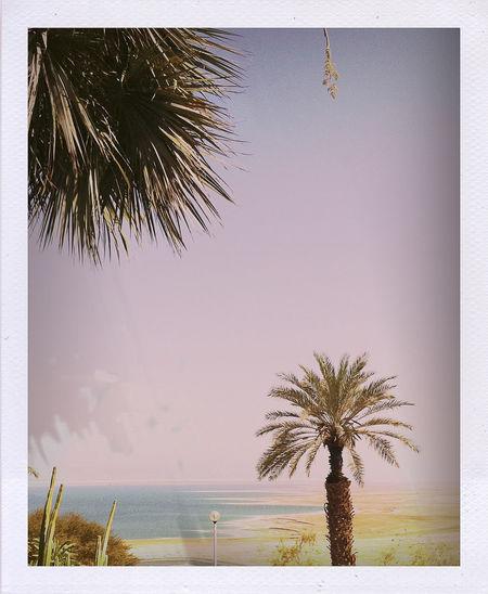 Palm tree on beach against clear sky