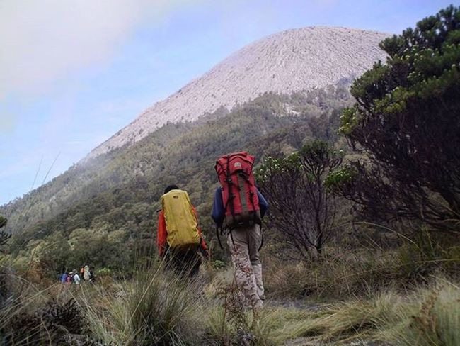 Jalan-jalan Pendaki Gunungsemeru sedang berjalan diantara Pohon Edelweiss menuju Kalimati , TNBTS Eastjava . 2007, Kamerapocket . Hiker Adventure Mounts Volcano Trekking Natgeotravel Holiday