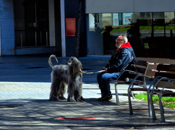 Woman with dog sitting on seat