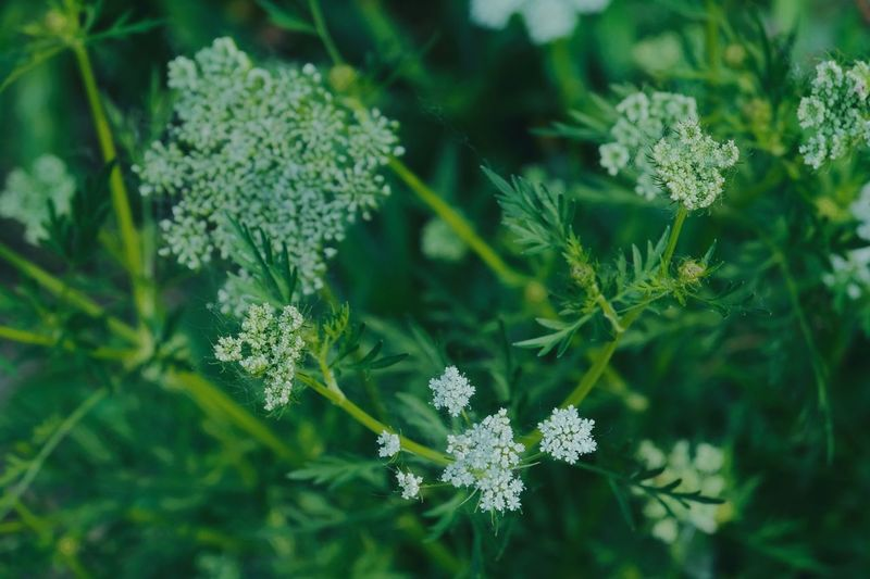 Plant Beauty In Nature Green Color Flower Flowering Plant Plant Part Nature Food And Drink Freshness No People Leaf Botany Focus On Foreground Close-up Healthcare And Medicine Outdoors Growth Day Food Fragility