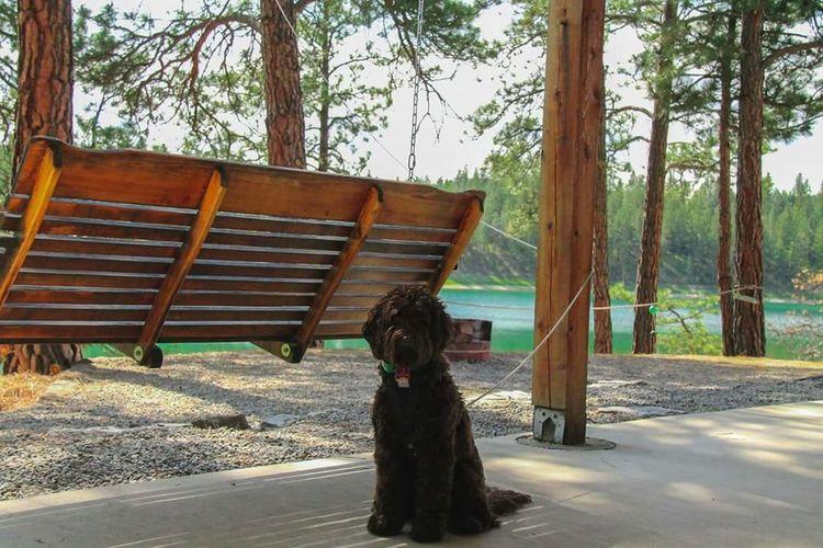 Hanging Out Taking Photos Enjoying Life Best Friends Montana Lake Cottage Life Dog