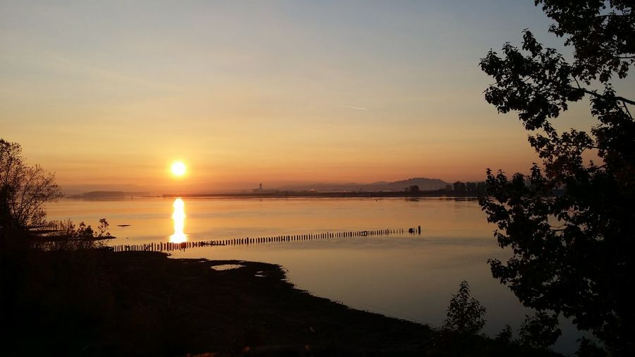 Morning on the Columbia river Tree Water Sunset Sea Beach Silhouette Sun Astronomy Reflection Sunlight