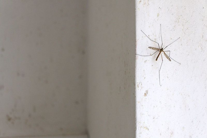 Close-up of insect on wall