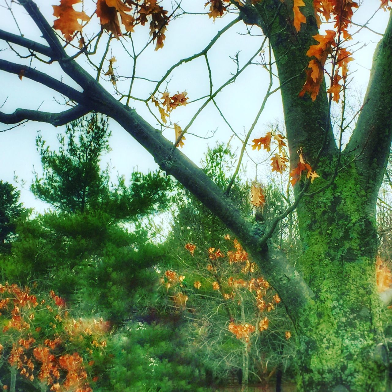 tree, growth, nature, green color, branch, no people, leaf, beauty in nature, day, autumn, plant, outdoors, forest, tranquil scene, low angle view, tranquility, tree trunk, scenics, sky