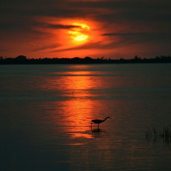 Walks Away Sunset Sunset_collection Clouds And Sky United States Florida Digitalu Bird Watching Nature Landscape_Collection Hidden Gems  43 Golden Moments Beauty In Nature Seascape Outdoors Swflorida Bokeelia Swfl