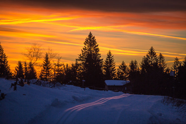 Trees on snow covered landscape against sunset sky