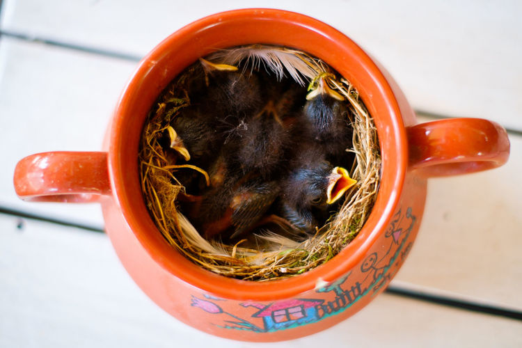 Al Birds Close-up Cup Cute Cuteness Feeding  Fragile Home Hungry Jar Landscape Lifestyles Nest Safe Safety