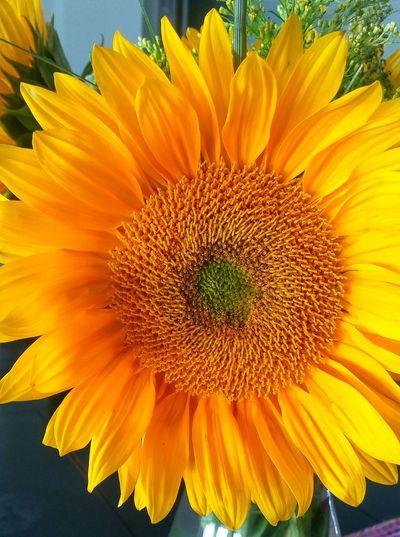 Flower Head Flower Yellow Sunflower Concentric Beauty Petal