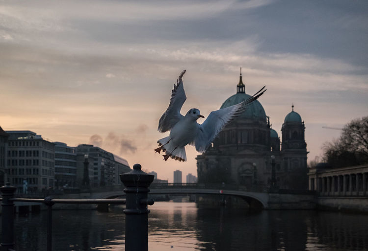 Möwe Berliner Dom Architecture Art And Craft Bird Bridge Bridge - Man Made Structure Building Building Exterior Built Structure City Cloud - Sky Dove Nature No People Outdoors Representation Sculpture Sky Statue Sunset Tourism Travel Travel Destinations Water