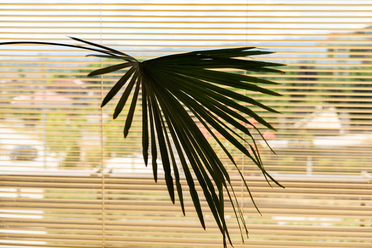 Close-up of palm leaf against window