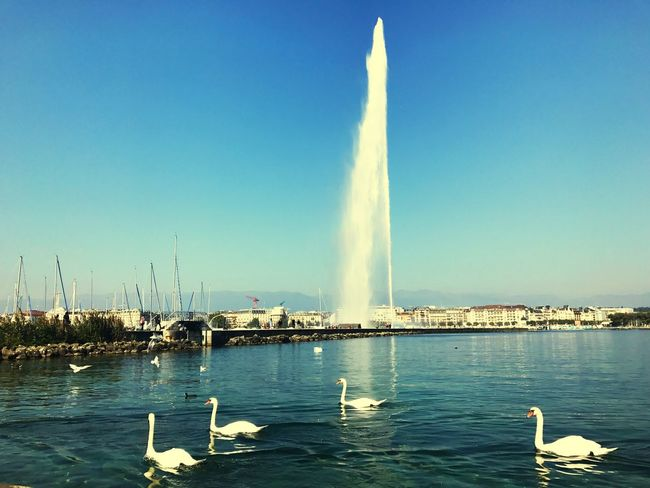 Geneva Jetdeau